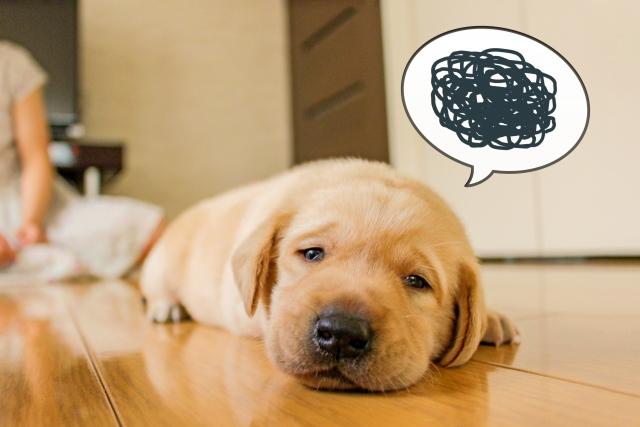 ストレスが溜まっている犬